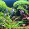 Akwarium roślinne - oświetlenie