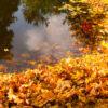 Oczko wodne - przygotowanie jesień zima
