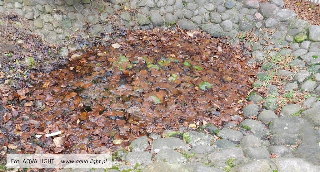 Oczyszczanie oczka wodnego z liści, odmulanie dna