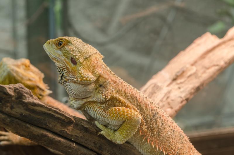 jaszczurka Oświetlenie terrarium