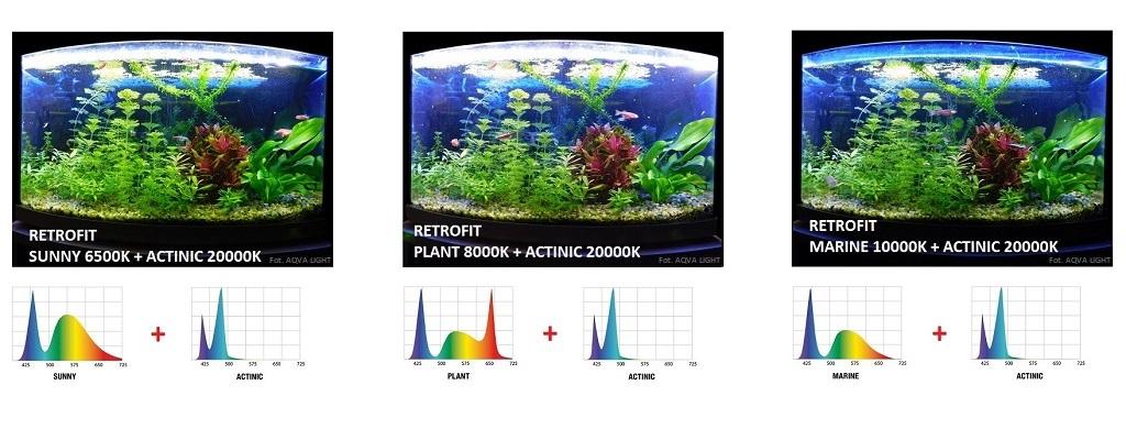 Oświetlenie akwarium modułem LED RETROFIT ACTINIC w kombinacji z wersją SUNNY, PLANT i MARINE