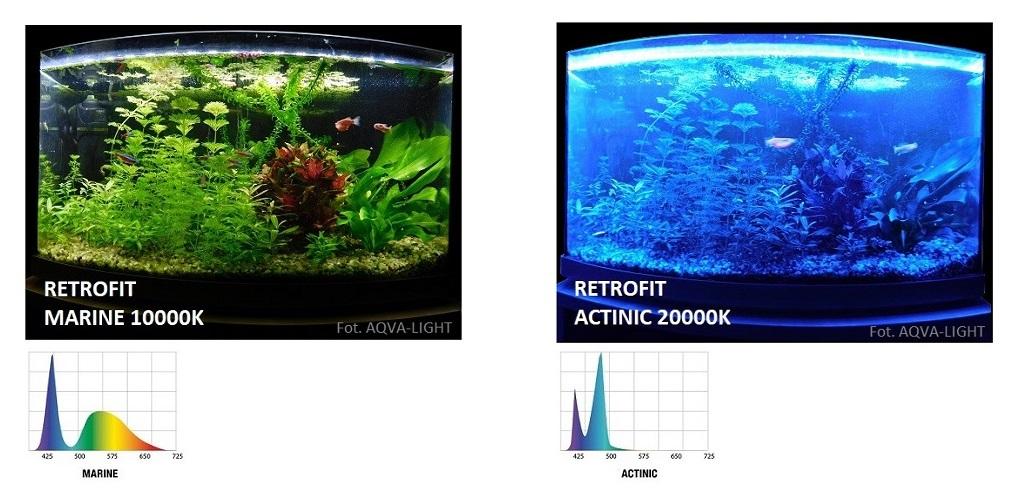 jakie lampy led dod akwarium morskiego opinie