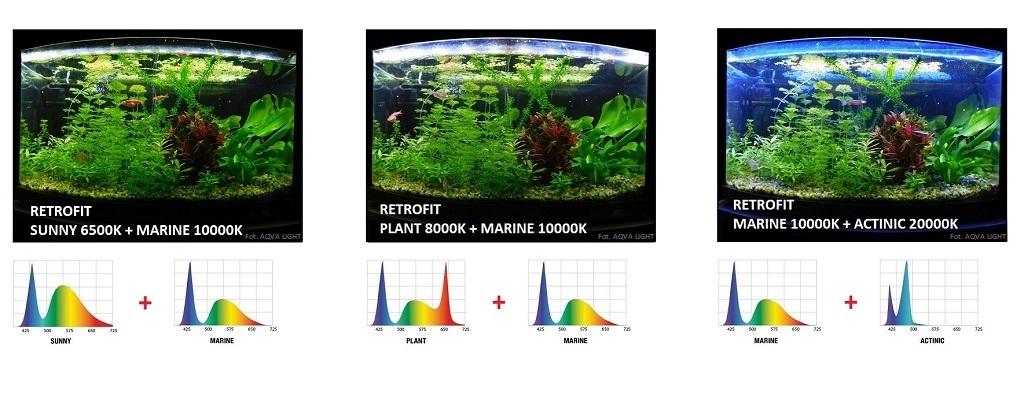 Oświetlenie akwarium modułem LED RETROFIT MARINE w kombinacji z wersją SYNNY, PLANT i ACTINIC