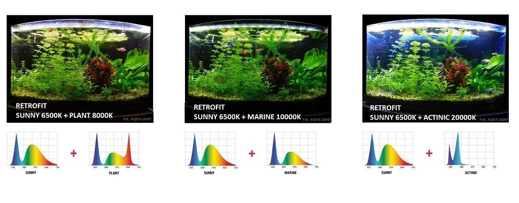 Oświetlenie akwarium modułem LED RETROFIT SUNNY w kombinacji z wersją PLANT, MARINE i ACTINIC
