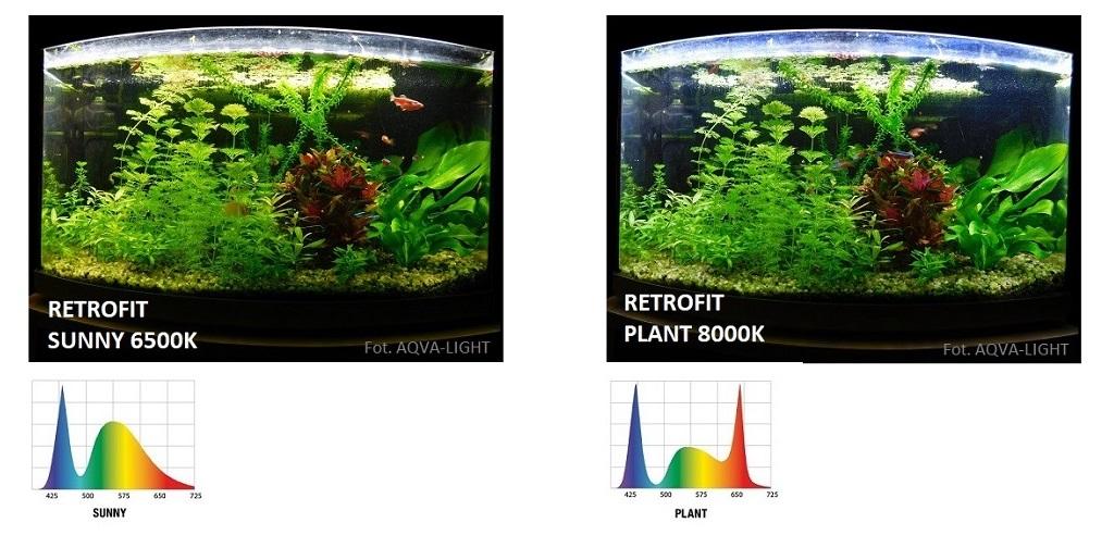 Moduły Led Retrofit Aquael W Akwarium Wersje Montaż I Opinie