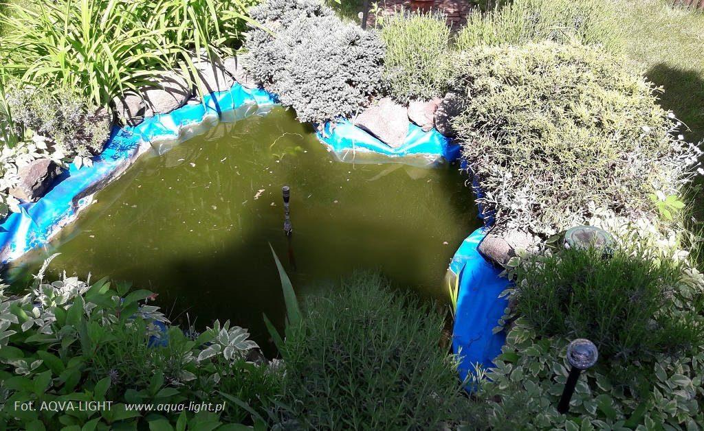 Klarowność wody w oczku wodnym po zminie