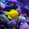 Akwarium morskie - oświetlenie