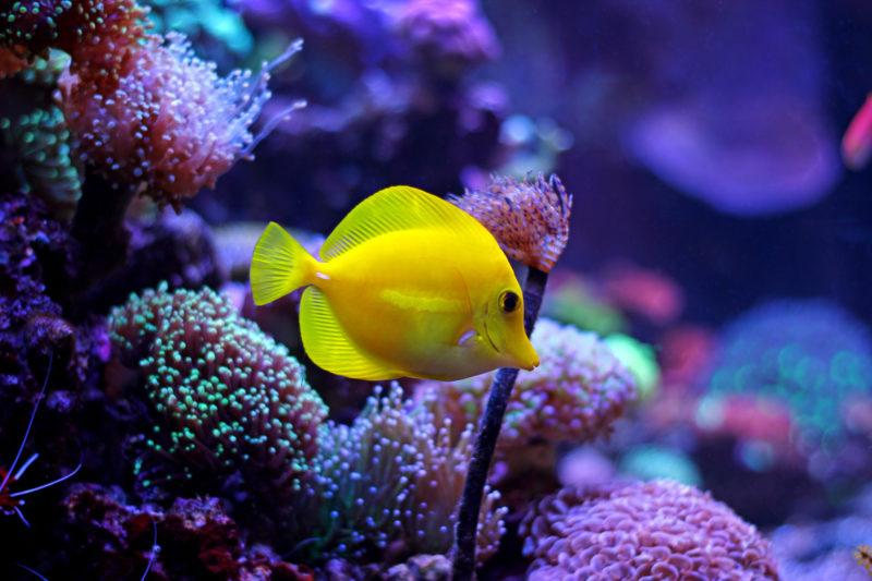 Oświetlenie Akwarium Morskiego Wybór Jaki Typ Oświetlenia