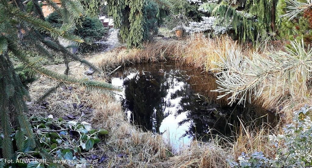Oczko wodne jesienią - rośliny | Blog AQUA-LIGHT