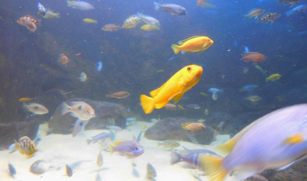 Oświetlenie Akwarium Biotop Malawi Blog Aqua Light