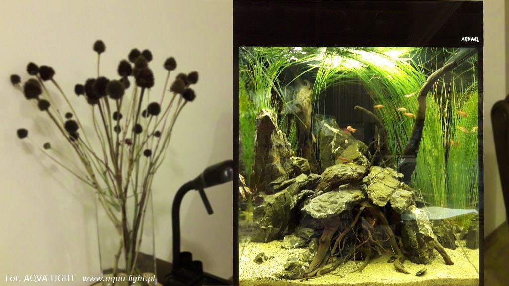 Akwarium Roślinne Oświetlenie świetlówki T5 T8 I Lampy Led