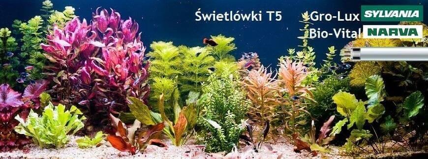 Świetlówki T5 Sylvania Gro-Lux i Narva Bio-Vital to doskonałe oświetlenie do akwarium roślinnego. Sprawdź naszą ofertę!