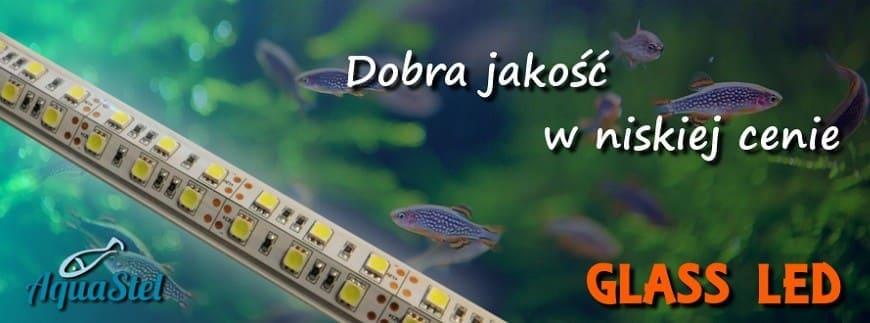 Lampki LED z diodami zamkniętymi w szklanej tubie - od AQUA-LIGHT! Sprawdź naszą ofertę!